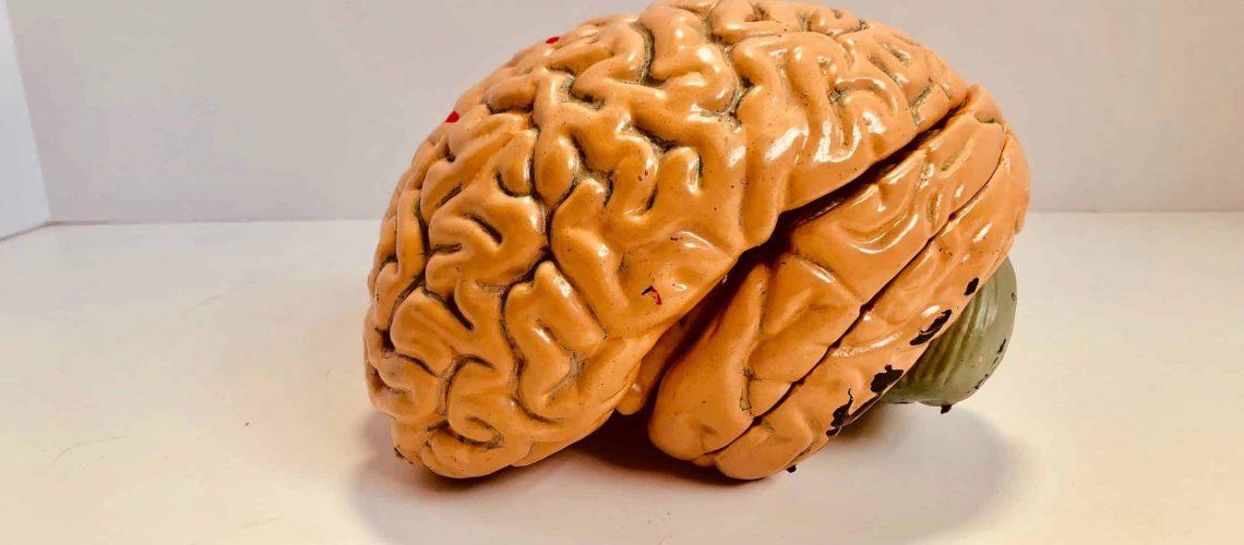 Dudefluencer: Brain